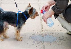 Hilfe für gestresste Hundebesitzer